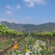 The Emiliana Vineyard in Chile