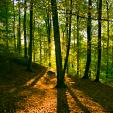 Grünewald Forest