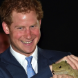 Prince Harry holds Henry the Tuatara while in Invercargill; 10-05-2015