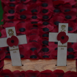 The poppy crosses planted by Prince Philip and Prince Harry at the Field of Remembrance; 05-11-2015