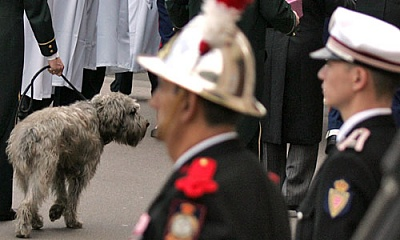 Click image for larger version  Name:rainierhund.jpg Views:498 Size:35.9 KB ID:126047
