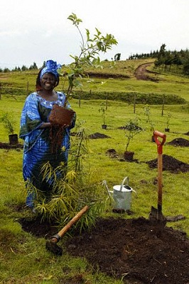 Click image for larger version  Name:Planting a tree.jpeg Views:168 Size:43.3 KB ID:62973